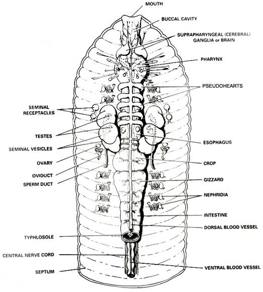 Evolution and the Body Systems of the Earthworm, Crayfish ...