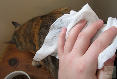 Using a Burt's Bees for Cats Hypoallergenic Wipe on Smooshie