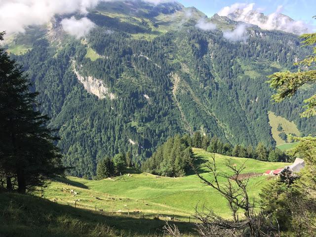Aussicht im Urwaldreservat