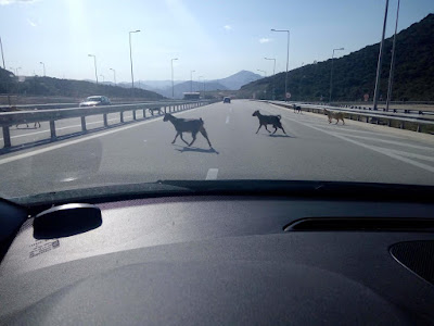 Θεσπρωτία: Κατσίκια κόβουν βόλτες επάνω στον αυτοκινητόδρομο της Εγνατίας Οδού (+ΦΩΤΟ)