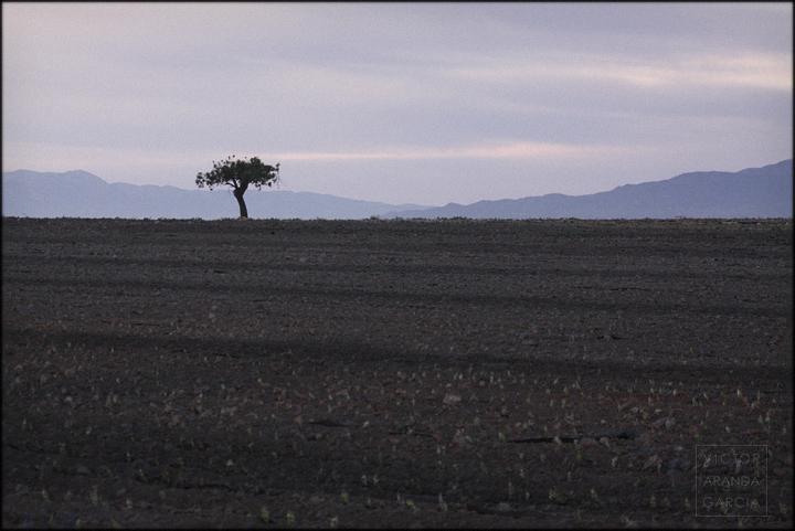 paisaje,naturaleza,arbol,murcia,campo,fotografia,fuente-alamo