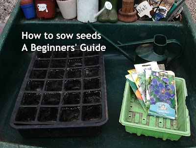 The Green Fingered Blog: How to sow seeds - A Beginner's Guide