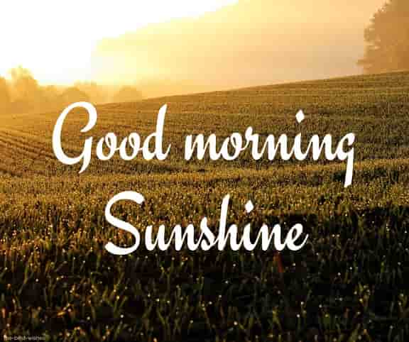 stunning good morning sunshine images