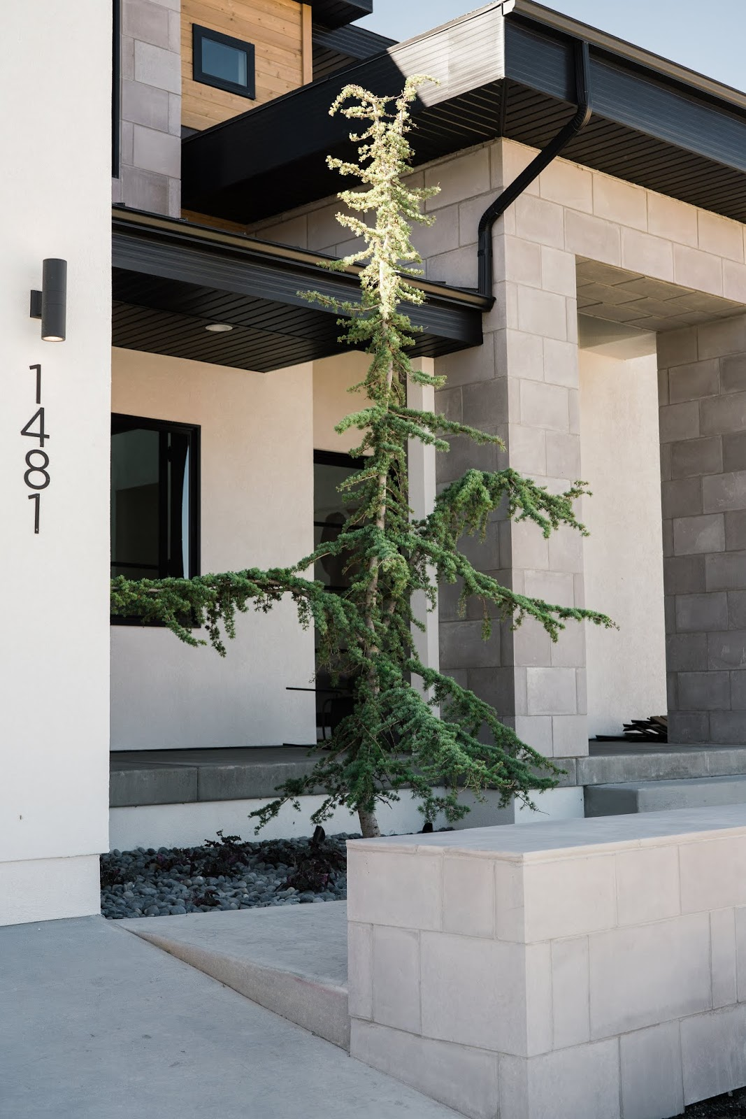 Tree, Modern Landscaping, Modern Tree