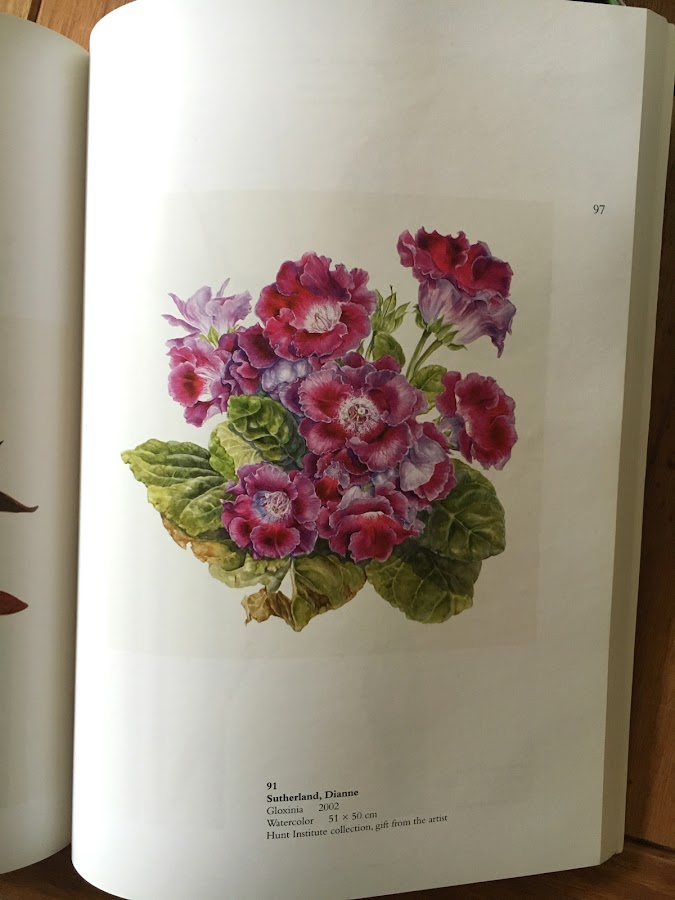 Gloxinia image of painting printed in the Hunt catalogue
