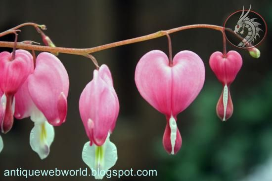 Antique Web World Real Heart Shaped Flower