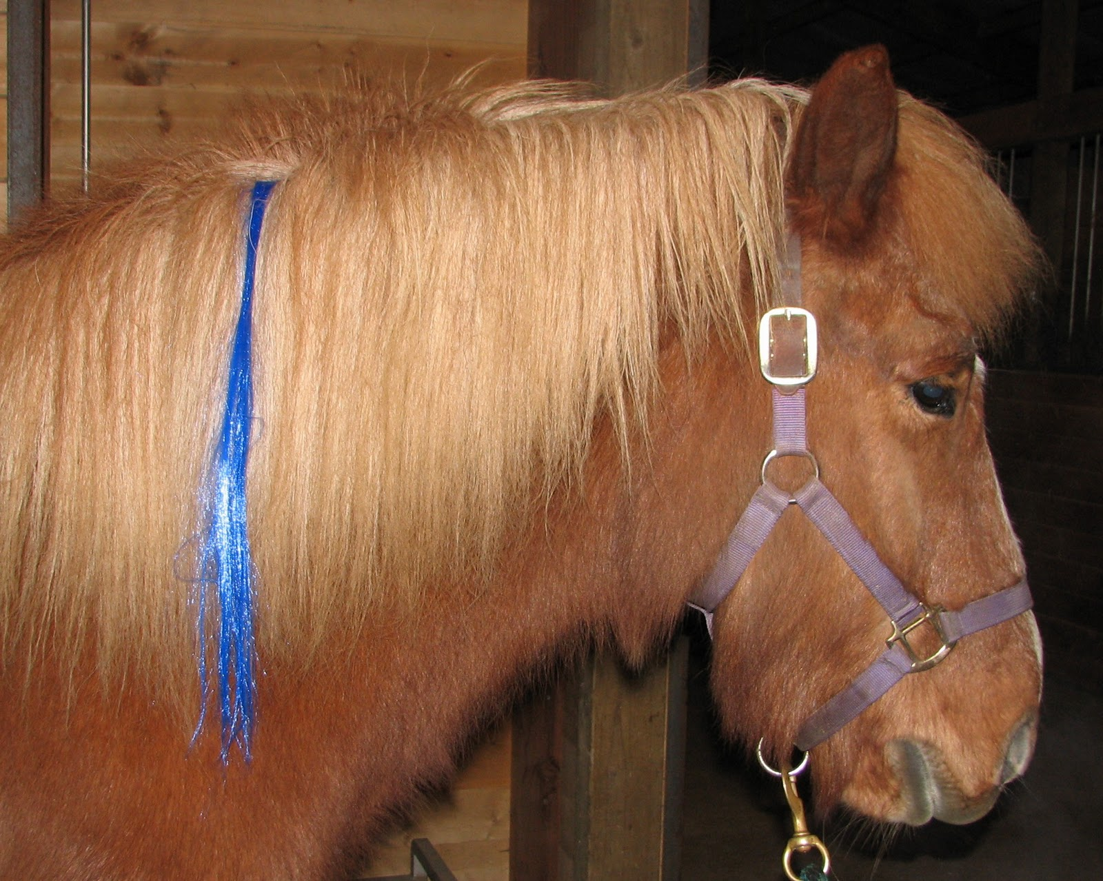 Blessi Ngs Life With An Icelandic Horse Talking A Blue Streak Over