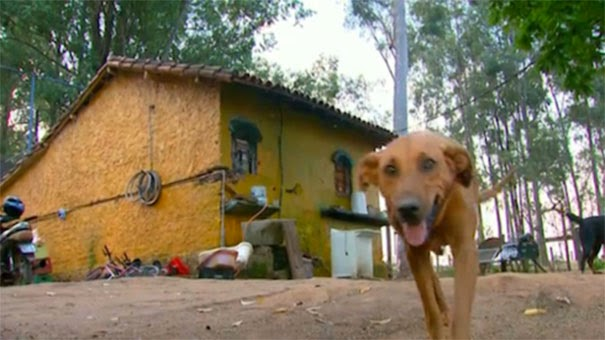 Η Αγάπη στη Φύση -Σκυλίτσα ταξιδεύει 6.5 χιλιόμετρα τη μέρα για ταΐσει τους φίλους της (ΒΙΝΤΕΟ) Αόρατα Γεγονότα