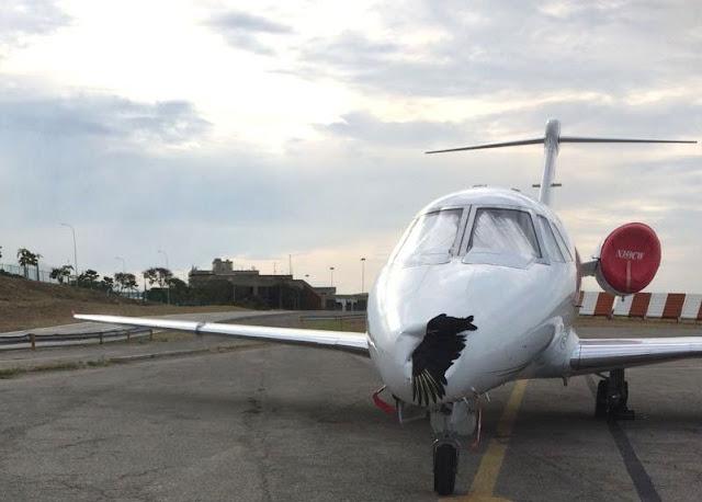 Avión atacado por un zamuro en Aeropuerto de Maiquetía