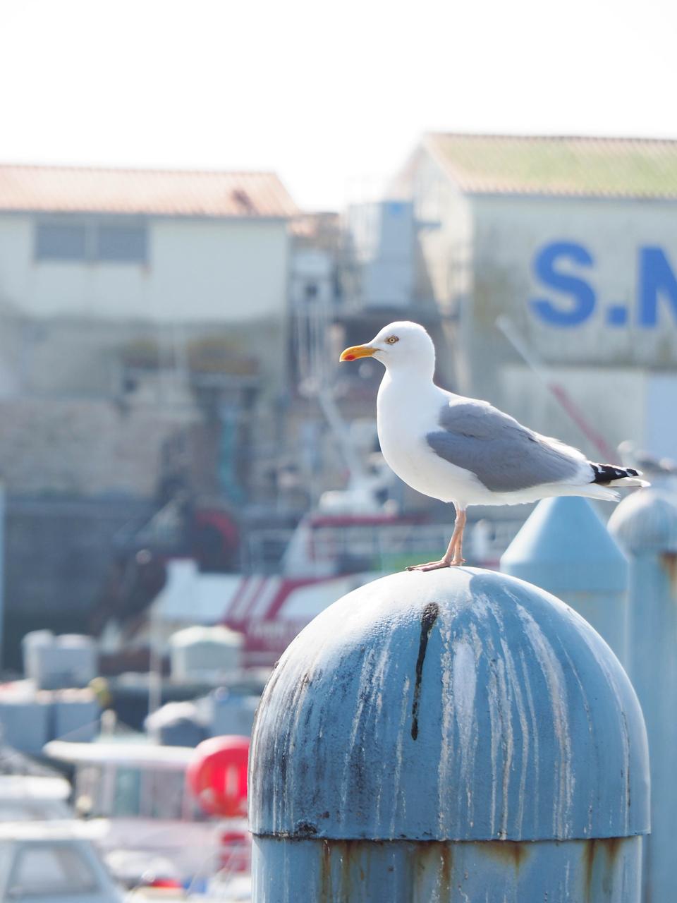 Voyages: Une matinée a L'île d'Oleron
