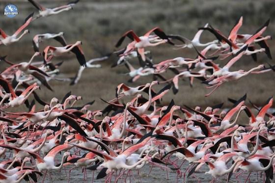 μεγάλα πουλί κλαμπ