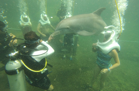 Dolphin Trek, Delphinus, Xel-Ha