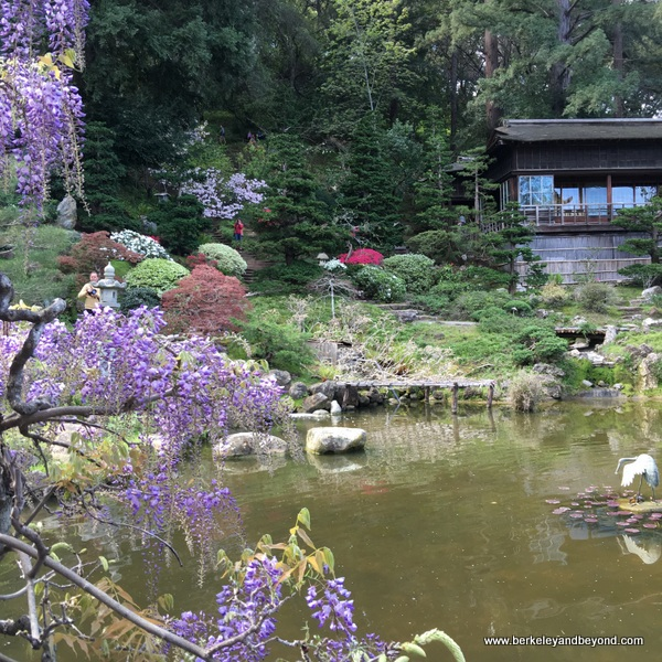 Hill and Pond Garden at Hakone Gardens in Saratoga, California