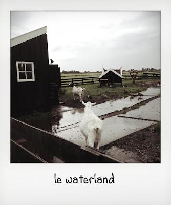 I dintorni di Amsterdam per bambini, le waterland
