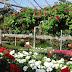 Λουλούδια από Γεωθερμία στον Νέστο - Δόθηκε το πράσινο φως σε ελληνογερμανική εταιρεία