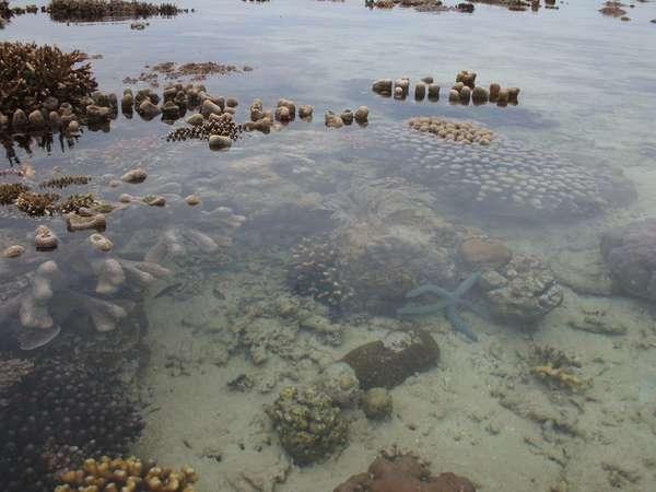 Tips Hemat Wisata Ke Pulau Derawan Berau