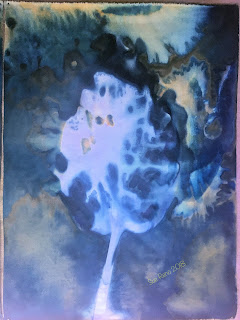 Wet cyanotype_Sue Reno_Image 438