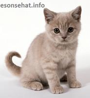 referensi-nama-kucing