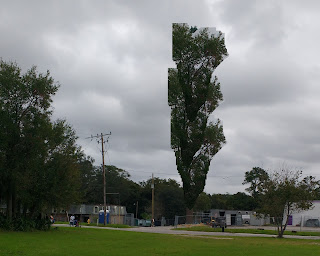 cell tower that looks like a deciduous tree