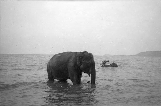 Archives du jour : Histoires d'éléphants