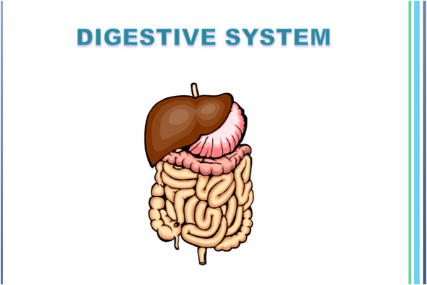 Respiratory, Digestive, and Urinary - Systems of the Human Body