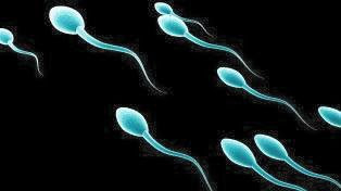 a sperm of a man