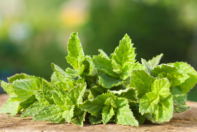 Thoát khỏi viêm họng nhờ 5 loại lá quen thuộc