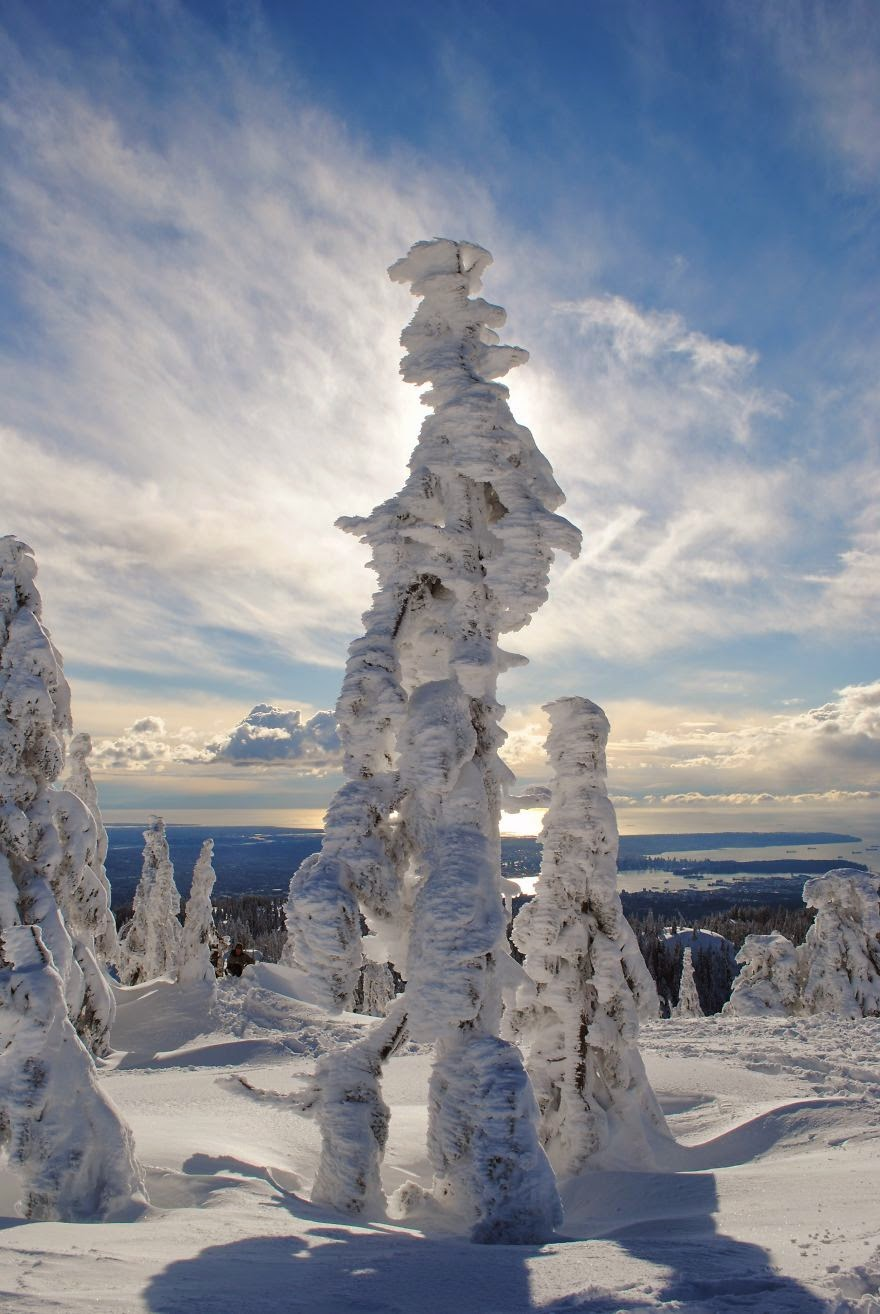 19. Ghost Tree Forest Mt. Seymour, British Columbia - 22 Mysterious Forests I'd Love To Get Lost In