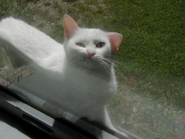 Funny cats - part 17 (41 pics) | Amazing Creatures