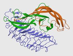Fungsi Hormon Estrogen pada Wanita dan Pria [Lengkap]