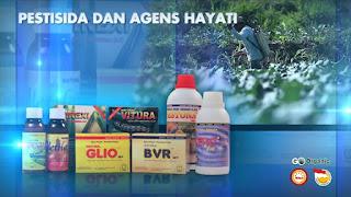 cara mengatasi hama tanaman dengan pestisida organik,macam macam pestisida organik