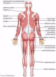 اعضاء جسم الانسان صور وكلمات مترجمة الى اللغة الانجليزية Human body