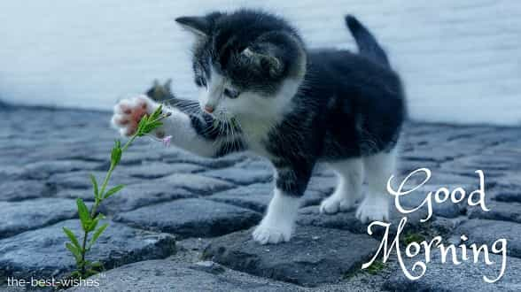 rose flower photos with cat flower kitten stone pet