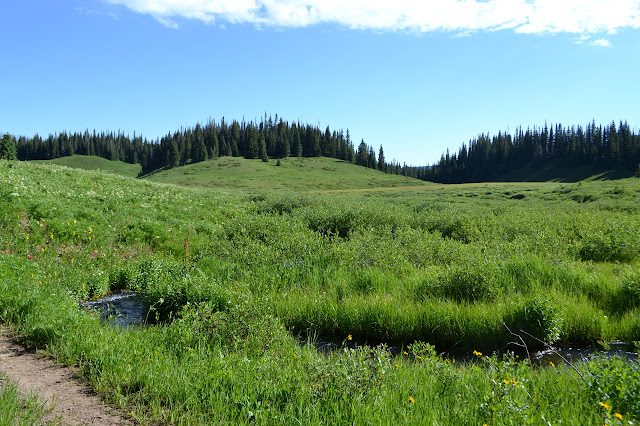 creek and meadow and trail