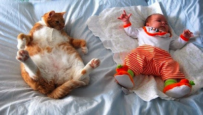 imitation baby and cat