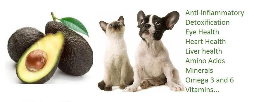 Ottawa Valley Dog Whisperer Avocado