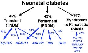 diabetes neonatal del cromosoma 6q24