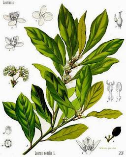 Composición química del laurel