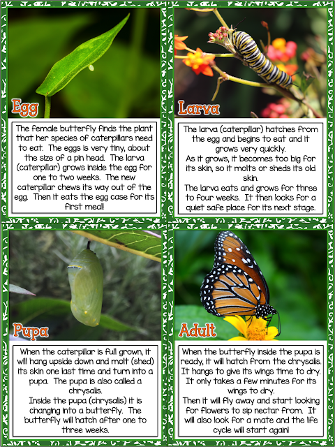 This is a great spring unit packed with fun information and activities on the theme of the Butterfly Life Cycle. This Butterfly Life Cycle unit has integrated Science and Literacy Activities (Common Core Aligned)  This is such a joyous unit to do with your students! It is packed with great activities that are sure to spark your students imagination and stimulate their minds.