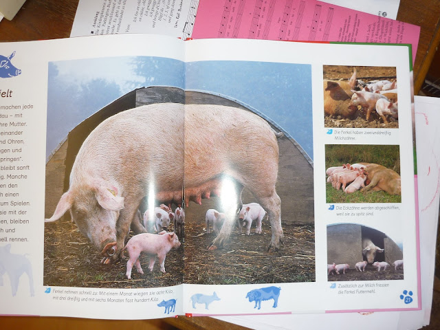 Sachbuch Schwein Kindergarten Kinder