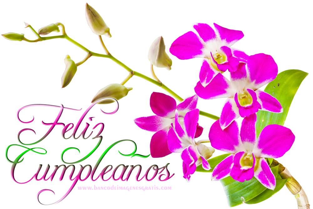 Felicitaciones De Cumpleaños Con Flores: BANCO DE IMÁGENES GRATIS: Feliz Cumpleaños Con Rosas Y