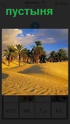 в пустыне имеется небольшой оазис с пальмами