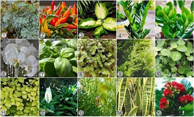 15 Plantas que atraem sorte, dinheiro e prosperidade
