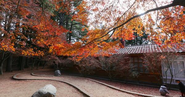 福壽山農場賞楓、清境老英格蘭、合歡山武嶺、108K楓之谷、飛燕城堡、松廬楓葉、天池