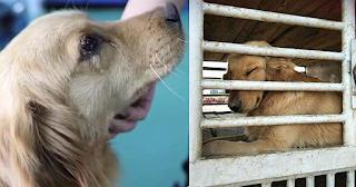 Σκύλος κλαίει μετά την διάσωσή του από αγορά κρέατος στην Κίνα