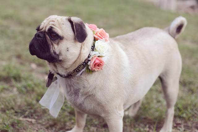 bride+groom+bridal+ceremony+river+lake+southern+south+pink+white+green+cowboy+cowgirl+horse+floral+arrangements+wood+woodland+rustic+shabby+chic+centerpiece+wedding+cake+dog+ring+bearer+dogs+simply+bliss+photography+10 - Grandpa's Ranch