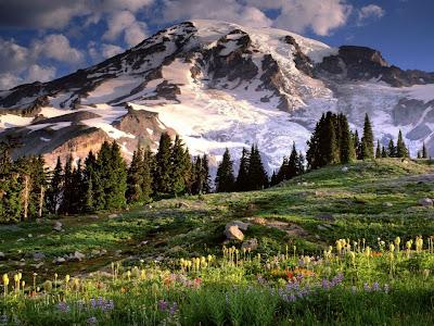 Keindahan Warna-Warni Bunga dan Alam Semulajadi