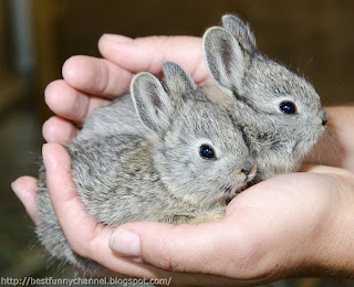 Two small bunny.