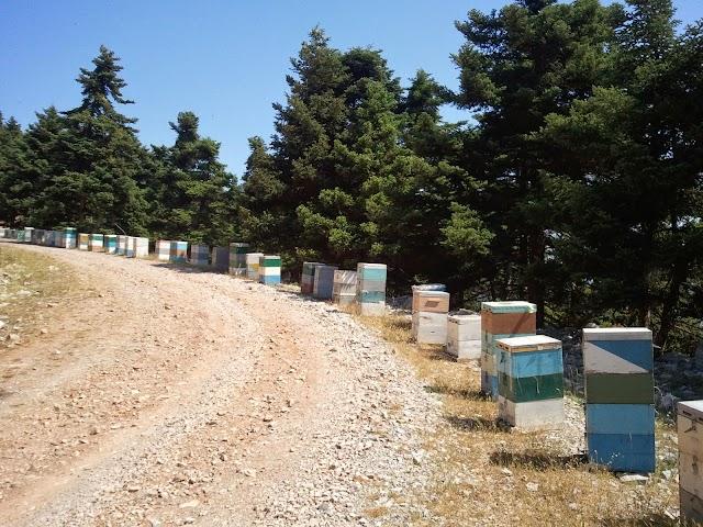 Νέα απο τον Έλατο και τη μελιτοέκκριση: Τι λέει η ζυγαριά σήμερα στην Ευρυτανία - 30 Μαΐου 2017