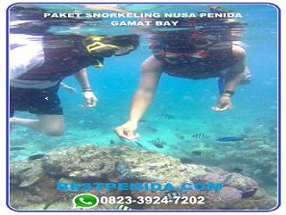 Paket snorkeling Nusa Penida Gamat bay